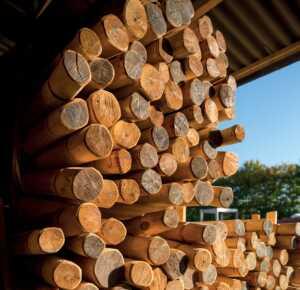 Troncs pour jeu en bois de robinier